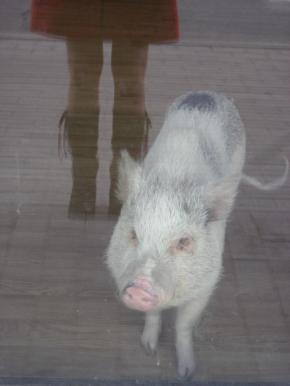 my piggy